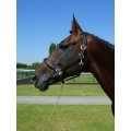 Padded Leather Headcollar - Horse Leather Headcollar