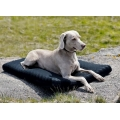 Back on Track Memory Foam Dog Mattress