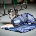 Back On Track Cooling Dog Coat