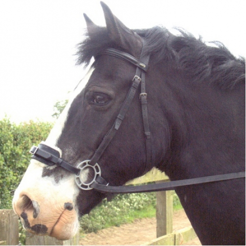 Your Guide to Different Types of Horse Bits | Equestrian ...