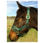 Monty Roberts Dually Halter - Horse Training Halter with DVD