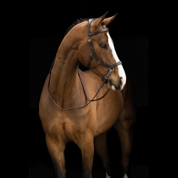 Rambo Micklem Multi Bitless Horse Bridle