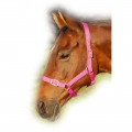Adjustable Webbing Horse Headcollar