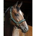 Back On Track Werano Halter / Headcollar